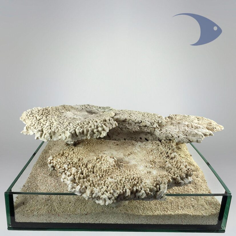 Roca Base Decoline Shelf