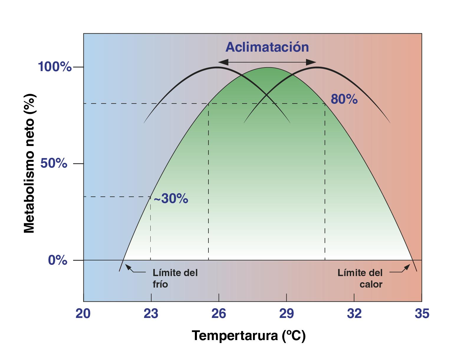 La temperatura en los acuarios: aclimatación